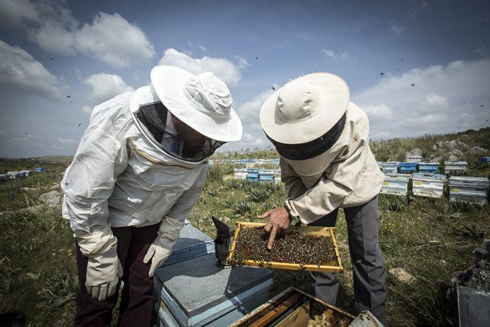 British Ecological Society image of bee keepers