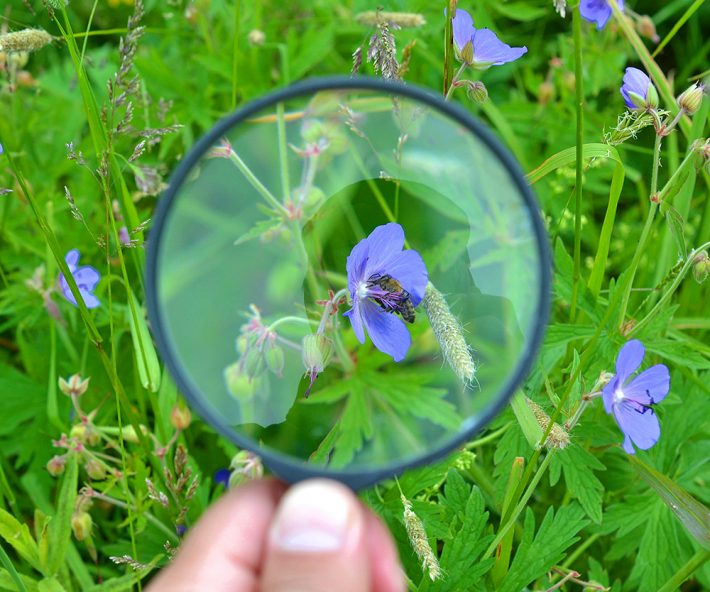 British Ecological Society image of a magnifying glass and flower