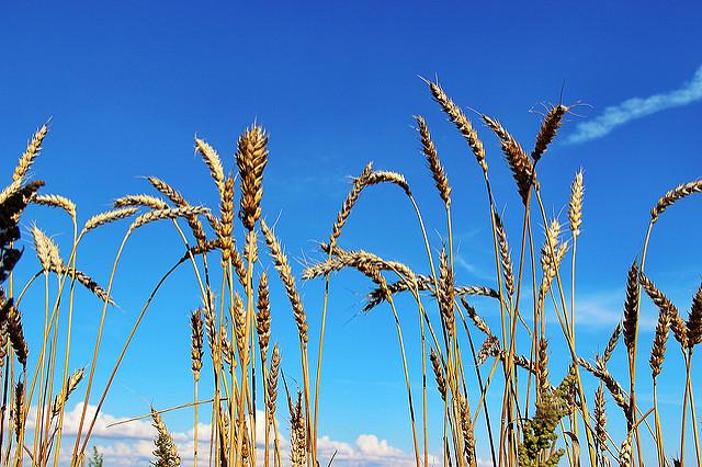Field of Crops. Susanne Nilsson/Flickr