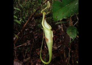 Press Release: Why plants eat faeces when they could eat flesh