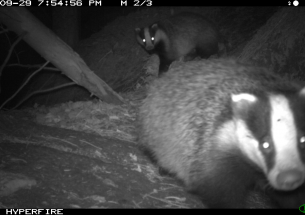 Citizen scientists help capture wild mammals on camera
