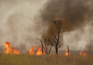 How fires are changing the tundra's face