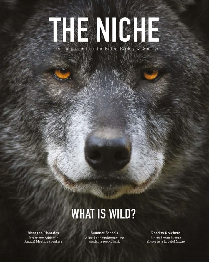 The Niche, your magazine from the BES