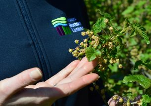 Warmer winters threaten UK blackcurrant farming