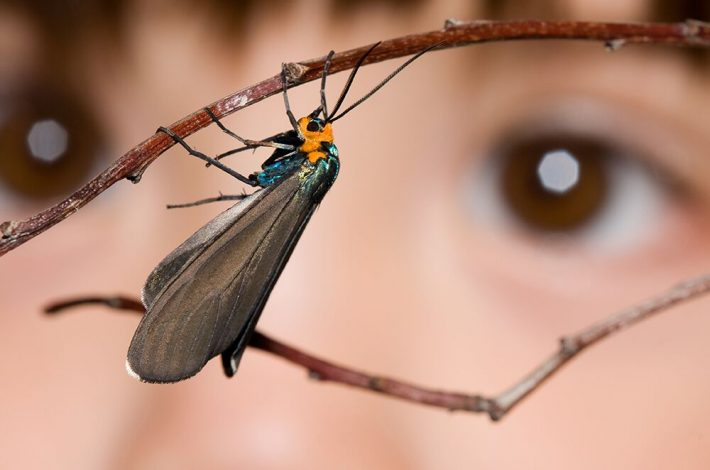 A child staring intently at a winged invertebrate on a twig