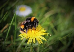 The hunger gaps: how flowering times affect farmland bees