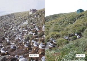 'Hotspots' reveal where sub-Antarctic seabirds are at risk from fishing