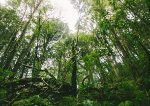 International Biodiversity Day: A Case for Conservation Optimism