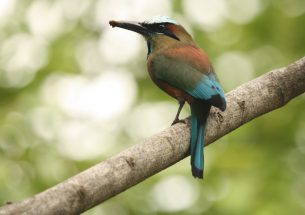 Working landscapes can support diverse bird species