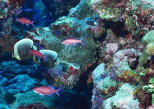 New study measures how much of corals' nutrition come from hunting