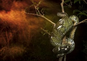Capturing Ecology – Winning images of British Ecological Society photography competition announced