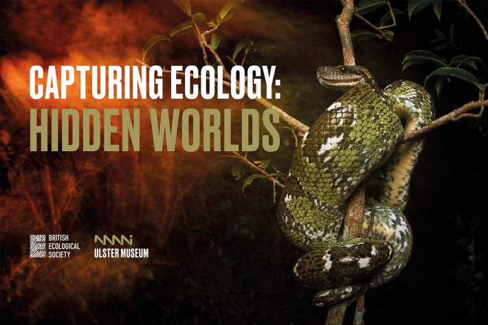 A Madagascan tree boa wrapped around a tree with the text 'Capturing Ecology: Hidden Worlds' next to it
