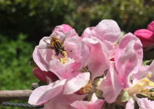Call for policy makers to protect pollinators