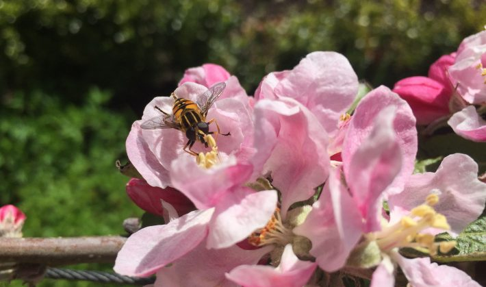 Pollinating insects could thrive if improvements are made to agri-environment schemes across Europe