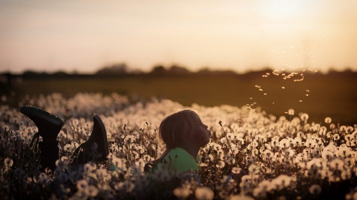 A child blowing dandelion seeds into the wind