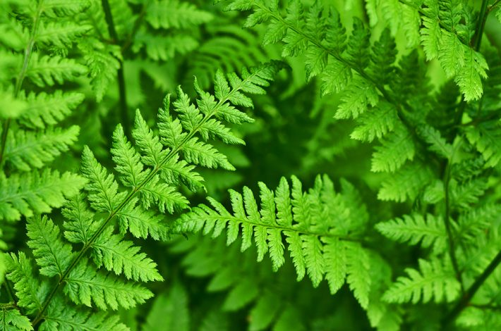 Close up image of fern
