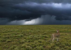 Join ecologists and climate scientists at 'Climate Science for Ecological Forecasting'