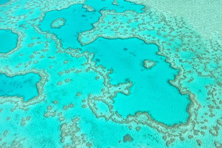 A top-down view of a coral reef showing through clear water, giving off a turquoise colour.