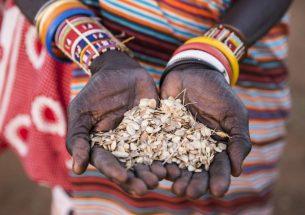 Indigenous people vital for understanding environmental change