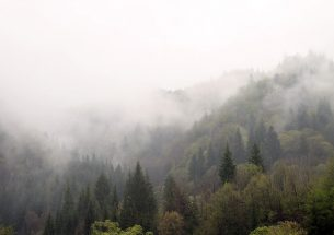 Biodiversity, Forestry and Wood: Reflecting on the Evidence