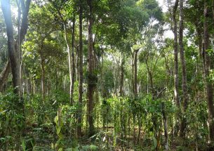 Vanilla cultivation under trees promotes pest regulation