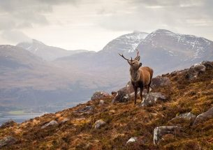 Opportunities for Implementing Biodiversity Net Gain in Scotland