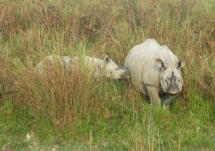 Researchers become DNA detectives to gather forensic evidence to aid rhino poaching prosecutions