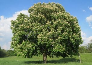 Climate warming linked to tree leaf unfolding and flowering growing apart