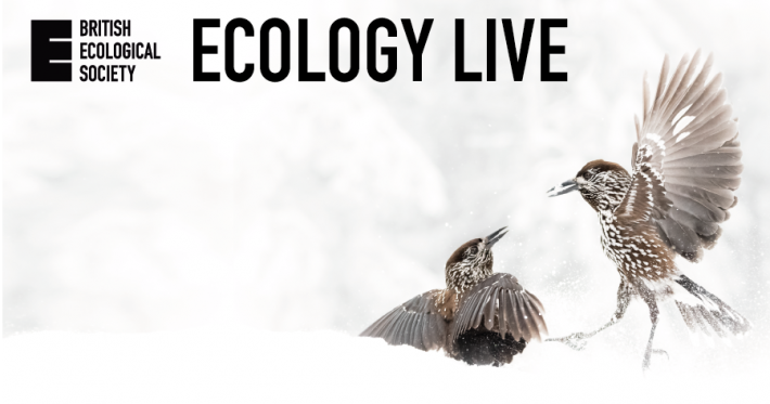 Ecology Live nutcrackers