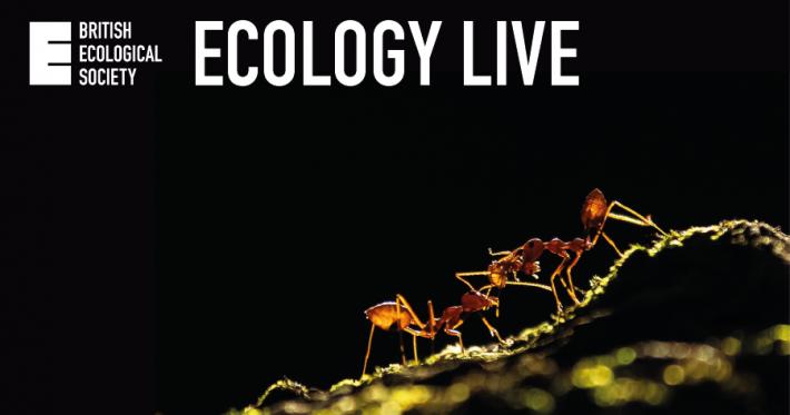 Ecology Live ants