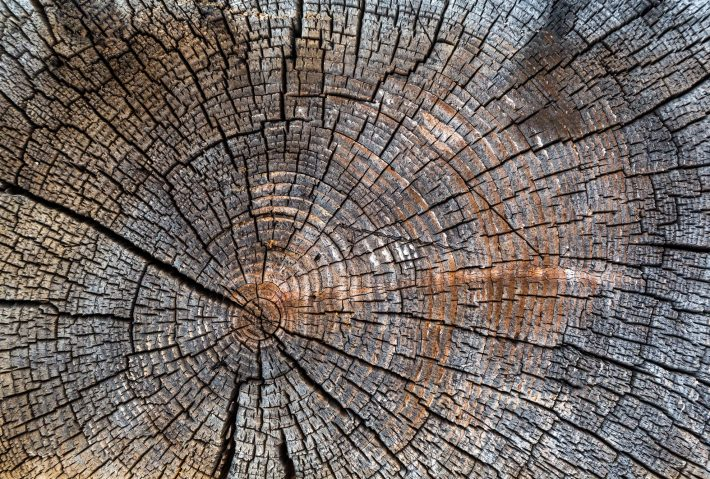 Old cracked tree stump