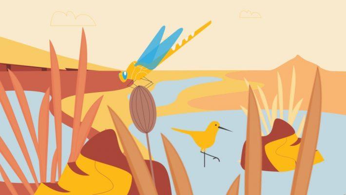 Nature-based solutions: Peatland scene