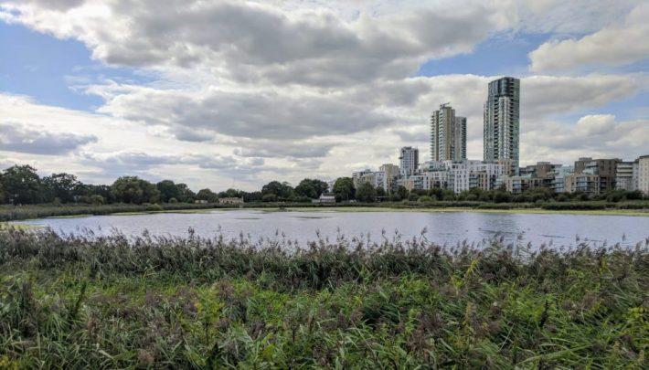 Woodberry wetlands. Credit: Katy Glennon