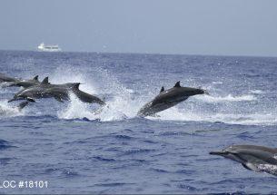 PWFusestourvessels toexamine thedistribution ofdolphinsin Hawaii