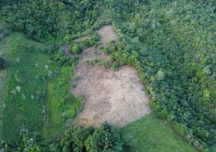 Colombia's increasing wildfires caused by institutional cattle ranching and land-grabbing