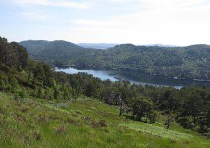 Restoring forest biodiversity in the Scottish Highlands