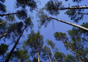 Forestry contributed to forest warming during extreme summers in Northern Germany
