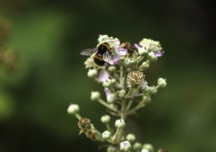 Bee flight suffers under temperature extremes