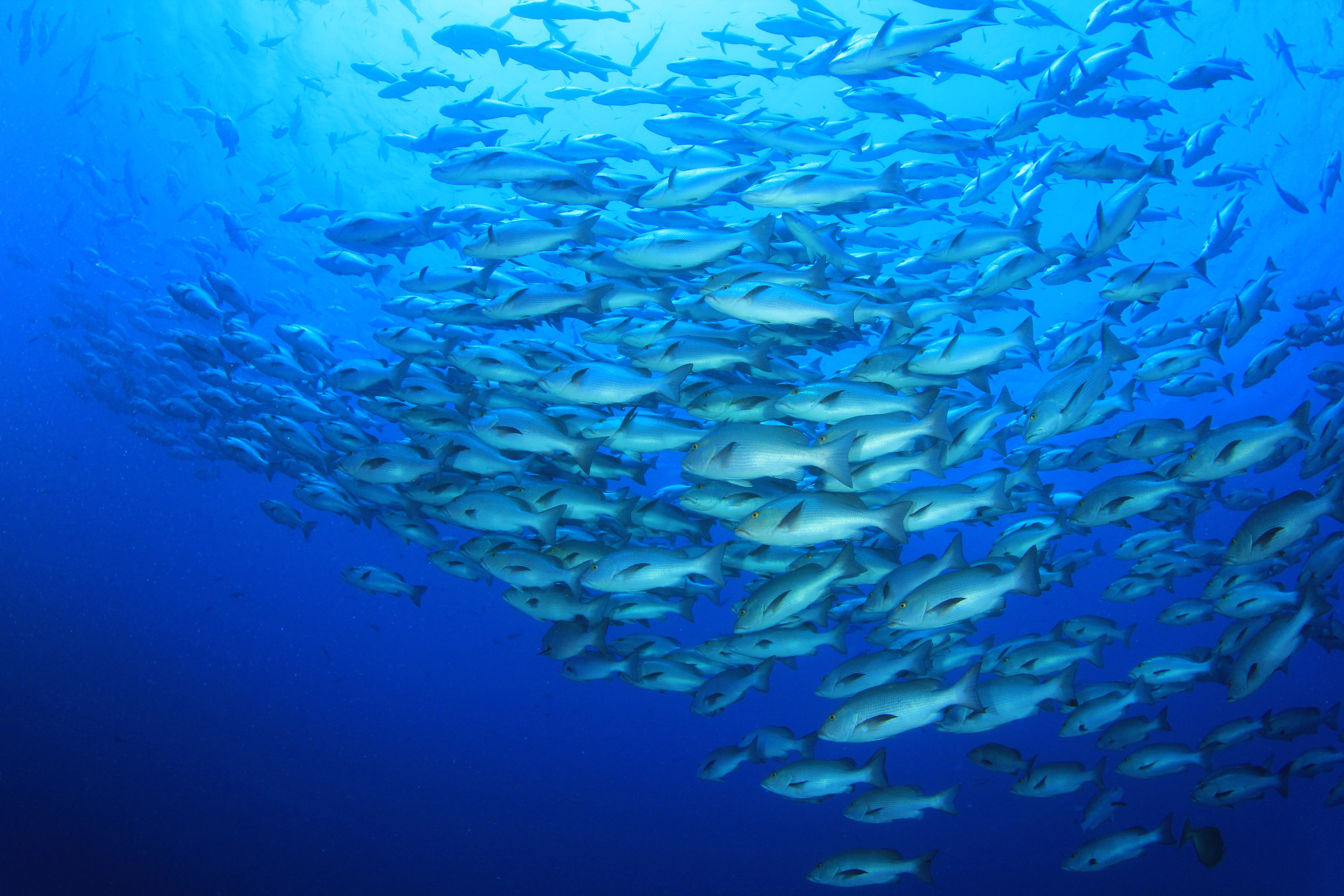 British Ecological Society image of shoal of fish