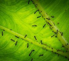Blog Editor – Journal of Animal Ecology