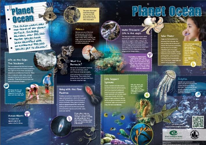 Marine Ecology Wallchart