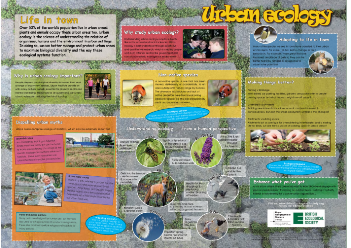 Urban Ecology Wallchart