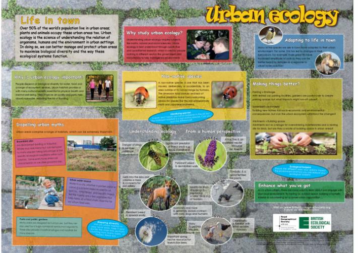 Urban Ecology Wallchart