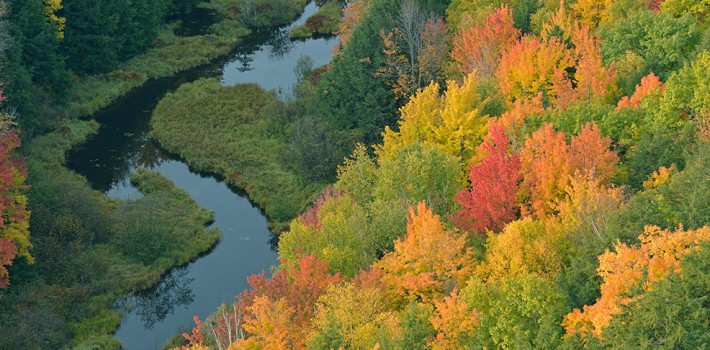 British Ecological Society image of trees and a river