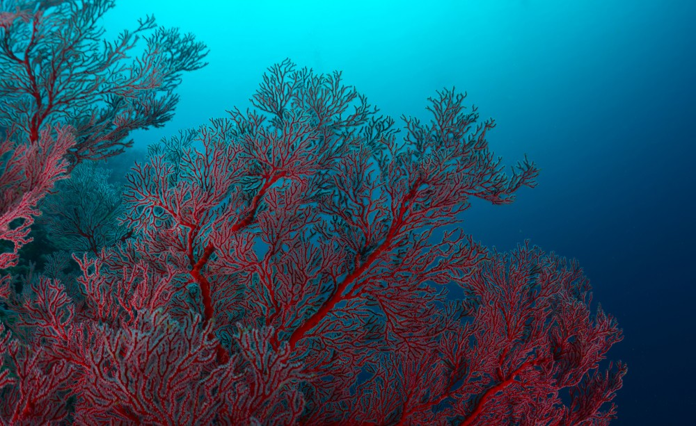 British Ecological Society image of coral