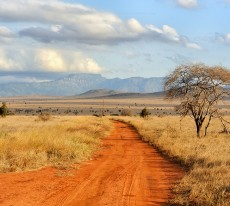 Ecologists in Africa