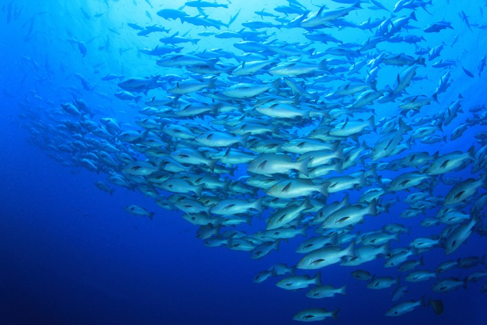 British Ecological Society image of a Shoal of fish