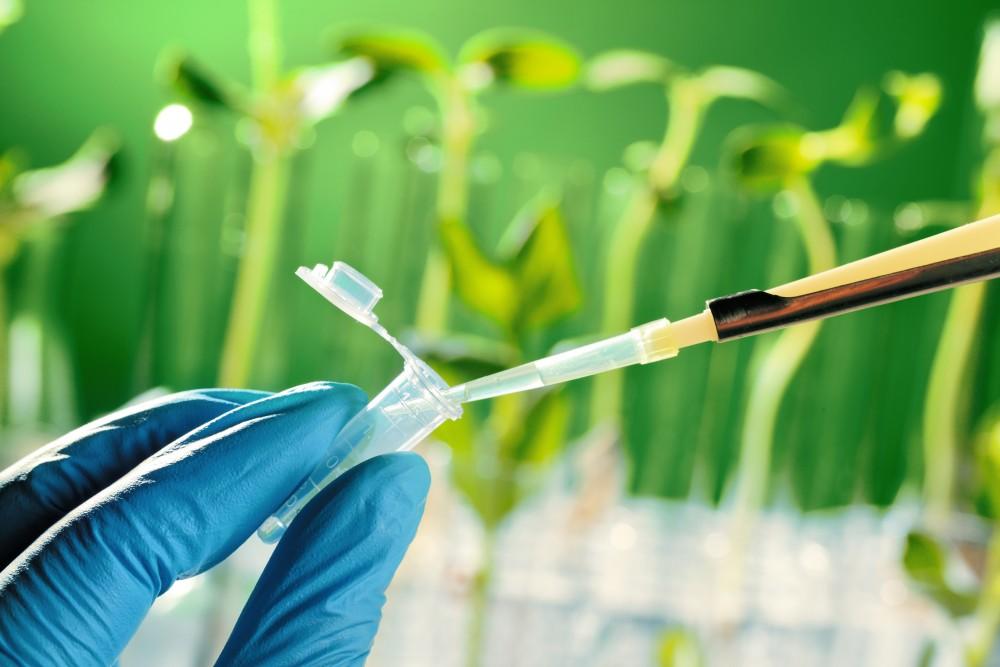 British Ecological Society image of plant test