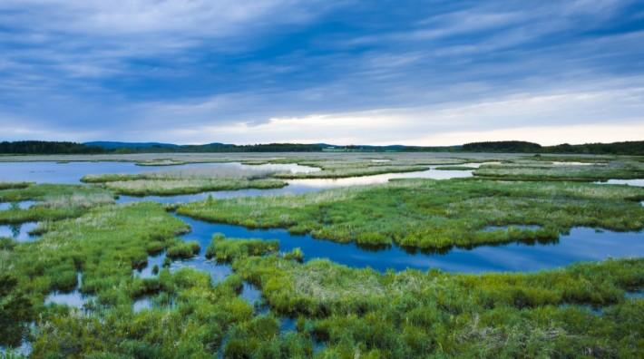 British Ecological Society image of wetland landscape