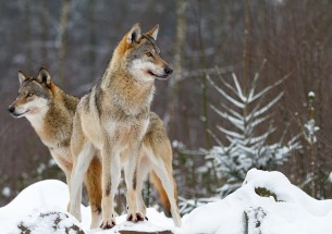 Debating extinctions, invasions and re-wildings